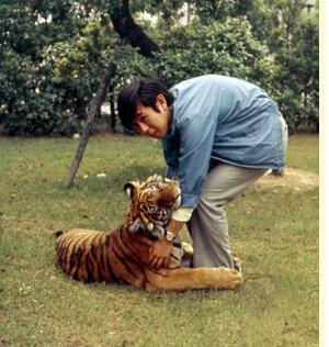 虎のハニーと