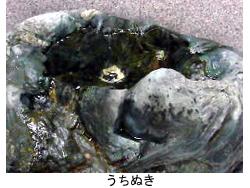 西条市観光交流センターうちぬき.jpg