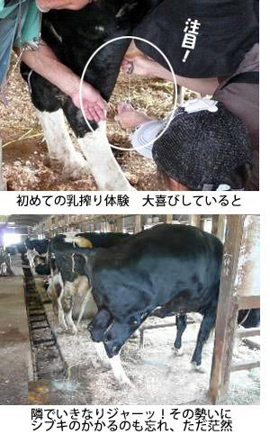 はじめての乳しぼり.jpg