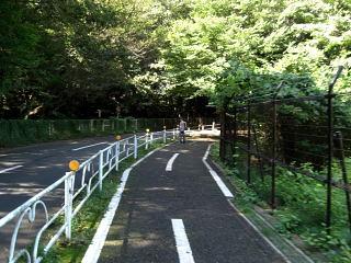 多摩湖自転車道13.3km