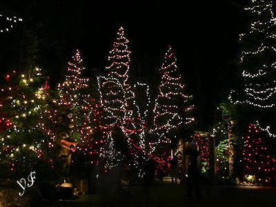 キャピラノ吊り橋 冬の夜 06