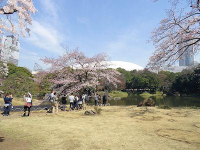 小石川後楽園 桜 02