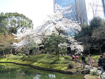 小石川後楽園 桜 05
