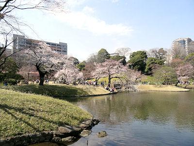 小石川後楽園 桜 06
