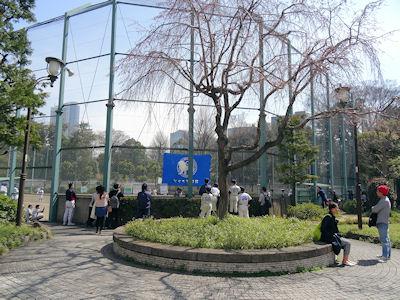 日本の子供野球 01