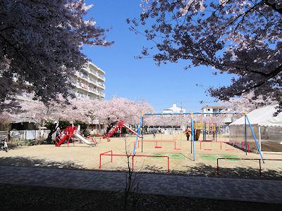 日本の桜 01