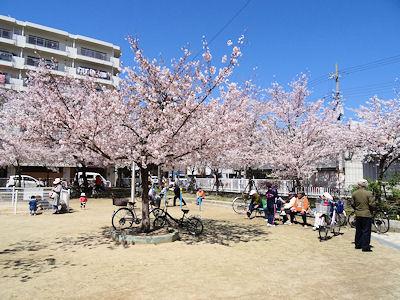 日本の桜 05