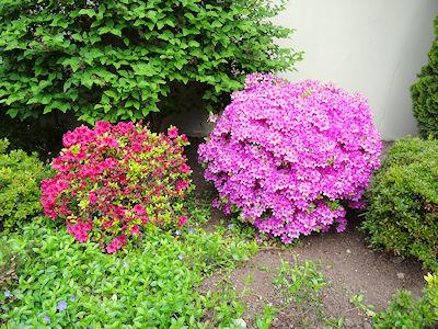 カナダ春の花 04