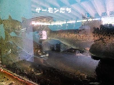 サーモンふ化場 05