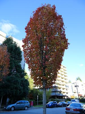 カナダの短い秋