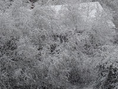 雪のバンクーバー 03