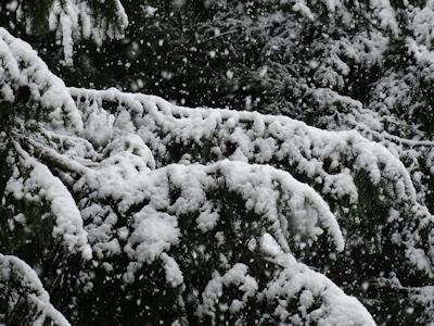 雪のバンクーバー 04