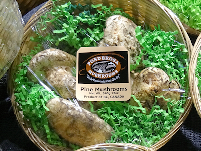 マツタケ Pine Mushroom