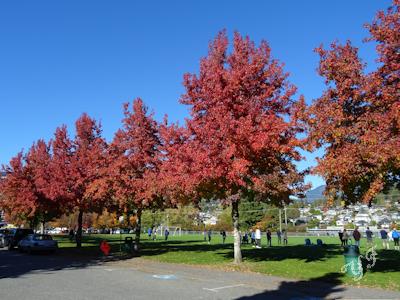 秋の木 紅葉 01