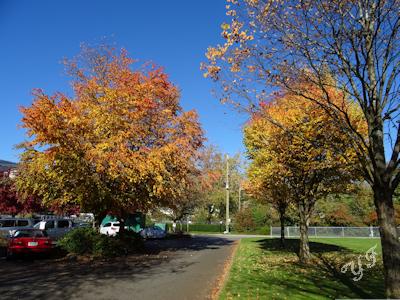 秋の木 紅葉 02