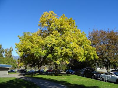 秋の木 紅葉 03