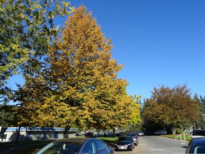 秋の木 紅葉 04