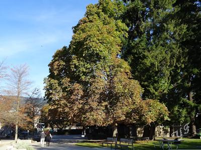 秋の木 紅葉 05
