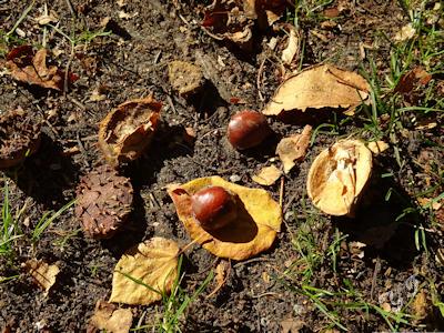 秋の木 紅葉 06