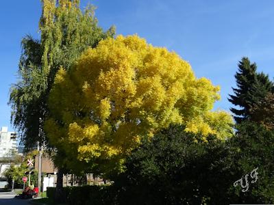 秋の木 紅葉 07