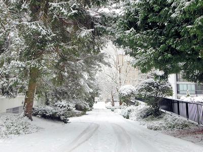 雪が積もっている裏道
