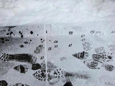 雪に残った人と犬の足跡