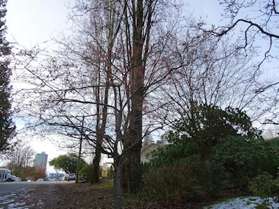 花が散った桜の木