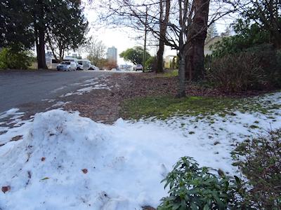 まだ寒い日の桜の木