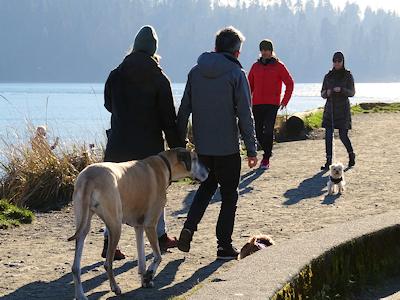 カナダの犬 01