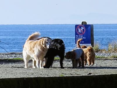 カナダの犬 04