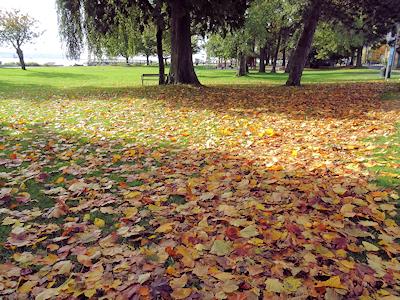 カナダの秋 落ち葉