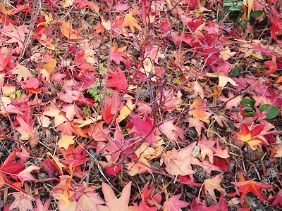 バンクーバーの公園の木 落ち葉