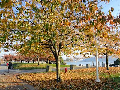 カナダの広葉樹 落ち葉