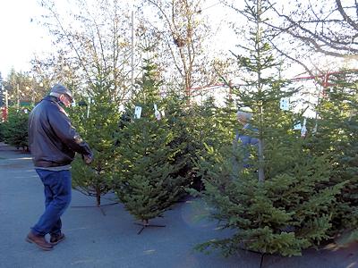 クリスマスツリーを吟味している男性