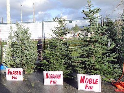 カナダでよくあるクリスマスツリー