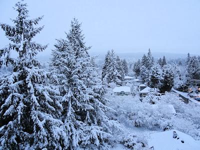 バンクーバーに雪が積もった