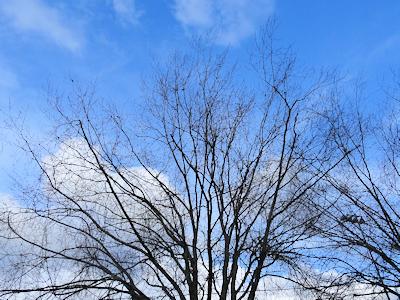 ムクドリがいる木