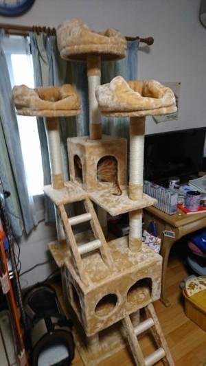 Cat Tower2