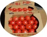 みりょく満点トマト
