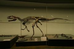 福井県立恐竜博物館ー3