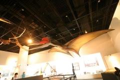福井県立恐竜博物館ー4