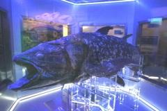 沼津港深海水族館−2