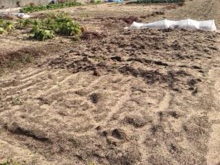 鶏糞は安価なのでホームセンターでまとめ買いします。有機肥料は長期的に効果が持続するので土づくりには重宝します。