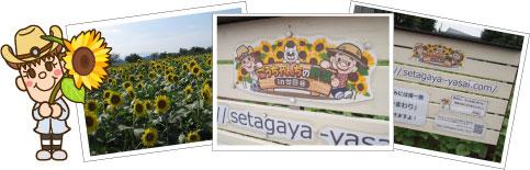 ひまわり畑への想い - こうちゃんちの野菜 in 世田谷