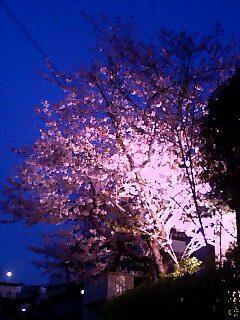 夜桜(トワイライト)