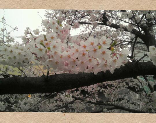 Collage 2015-04-16 08_15_45-1.jpg