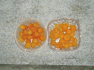 モミジイチゴとラズベリー