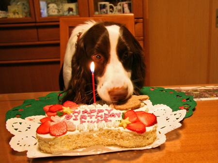 トッピー1歳の誕生日