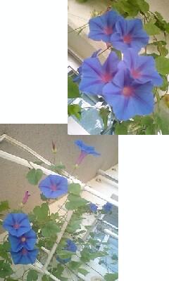 090921_1511~0001.jpg