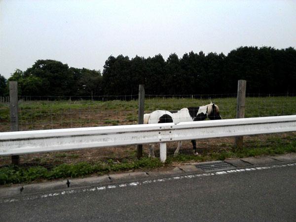 牛だ!!!と思い近づくと・・・
